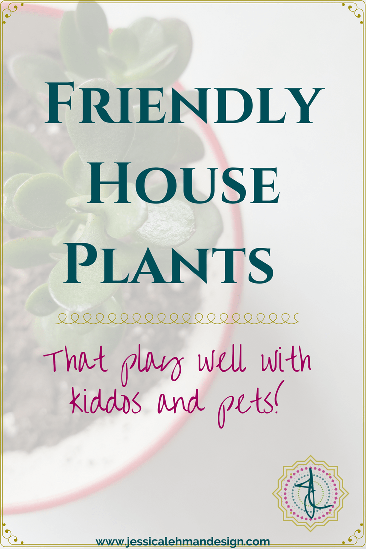 Kid and pet friendly houseplants